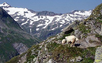 Wandern-Innergschloess-Badenerhuette-© r (81).jpg