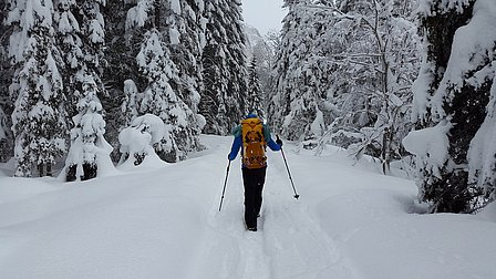 Winterwandern im Virgental, zu Fuß durch den Nationalpark | Bild pixabay.com