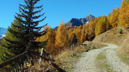 Am Katinweg hinauf bis zur Stabanthütte 1.770m | Mountinbike Radtour