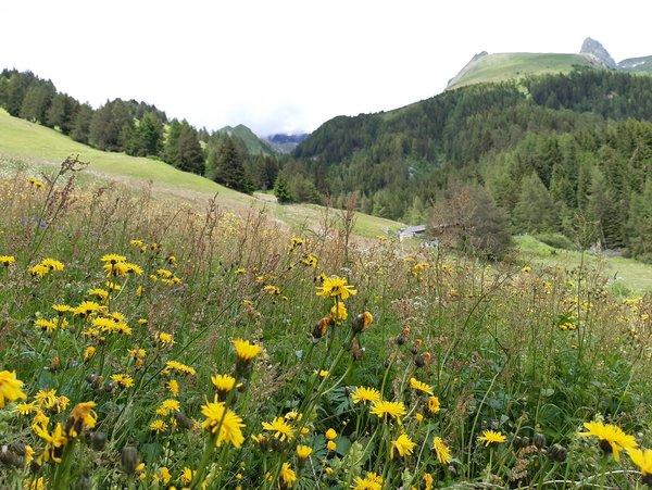 Ferienhaus Goisnalm 1.620 m