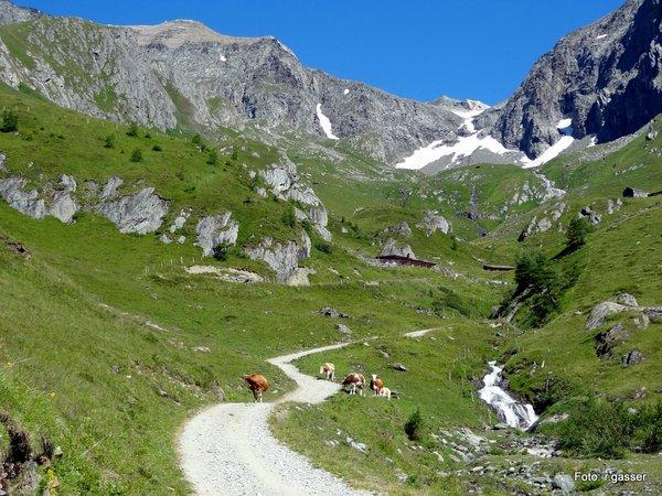 Schmiedler Alm 2.085 m